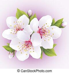 cseresznye, virágzás, fa, japán, sakura, branch-