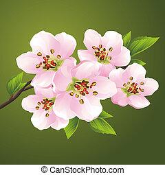 cseresznye, virágzás, -, japán, fa, sakura