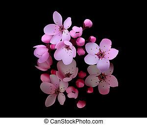 cseresznye virágzik