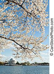 cseresznye virágzik, washington, jefferson, egyenáram, emlékmű