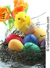 csibék, húsvét