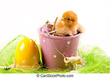 csibe, húsvét