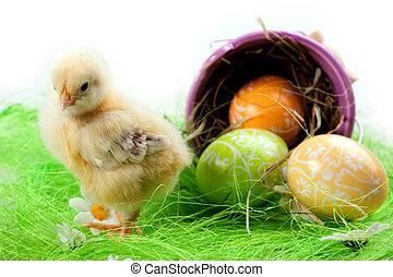 csibe, ikra, húsvét