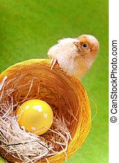 csibe, vödör, húsvét