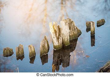 csikk, fa visszaverődés, napos, víz, rothadt
