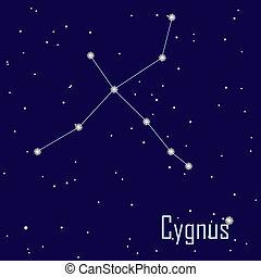 """"""", csillag, sky., cygnus"""", ábra, vektor, éjszaka, csillagkép"""