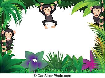 csinos, csimpánz, alatt, a, dzsungel