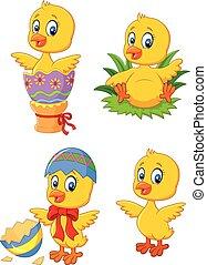 csinos, furcsa, csecsemő csirke, noha, húsvét