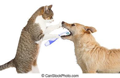 csinos, macska, takarítás, egy, kutyák, fog