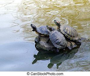 csinos, teknősbékára halászik