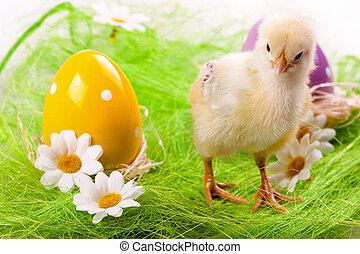 csirke, húsvét