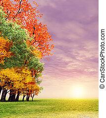 csodálatos, ősz, napnyugta