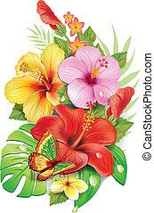 csokor, közül, tropikus, flowersv