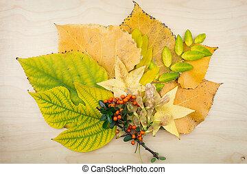 csokor, seeds., zöld, ősz, sárga, zöld, bogyók