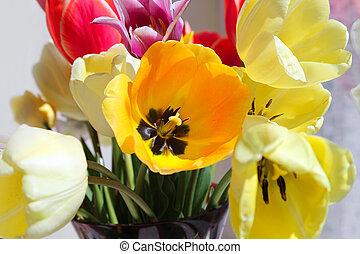 csokor, tulipánok, színes, eredet