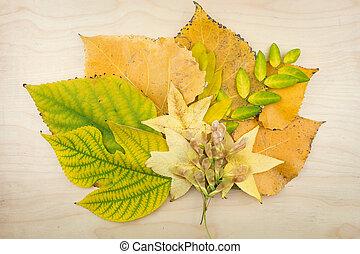 csokor, zöld, ősz, sárga, zöld, seeds.