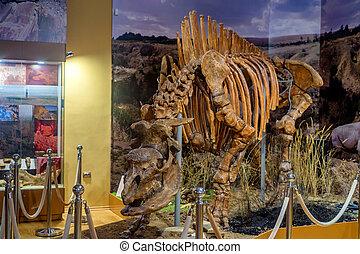 csontváz, közül, elasmotherium, alatt, múzeum