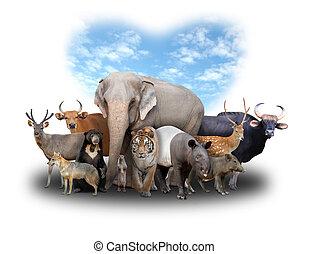 csoport, közül, ázsia, állatok