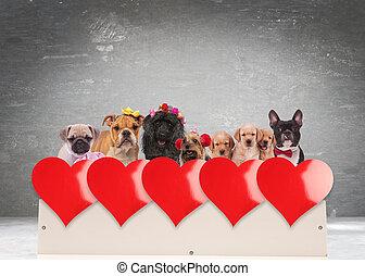 csoport, közül, imádnivaló, kutyák, misét celebráló,...