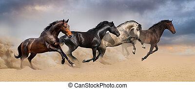 csoport, közül, ló, futás, galopp