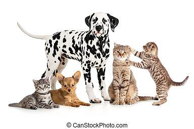 csoport, kollázs, állatorvos, elszigetelt, petshop, kisállat, állatok, vagy