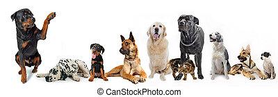 csoport, kutyák, macska