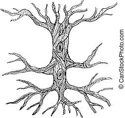 csupasz, törzs, fa, gyökér, választékos