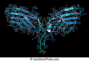 ctla4, antibodies, utilizado, ctla-4, cáncer, protein., ...