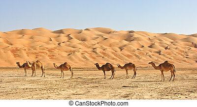 cuarto, vacío, camellos