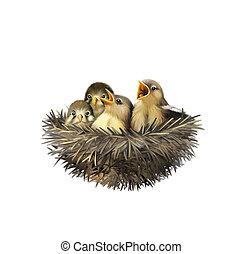 cuatro, bebé, nido, gorriones, hambriento