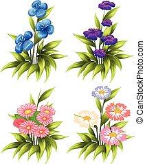 cuatro, conjuntos, de, florecer, flores