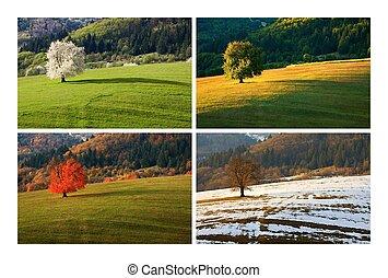 cuatro, estación, árbol, cereza