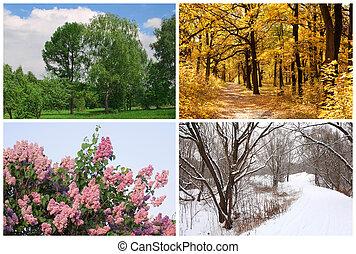 cuatro estaciones, primavera, verano, otoño, árboles invierno, collage, con, blanco, fronteras