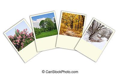 cuatro estaciones, primavera, verano, otoño, árboles invierno, foto encuadra, collage