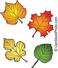 cuatro, hojas, otoño