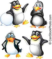 cuatro, juguetón, pingüinos