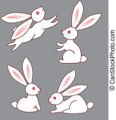 cuatro, lindo, blanco, conejitos