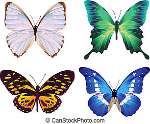 cuatro, mariposas, colorido