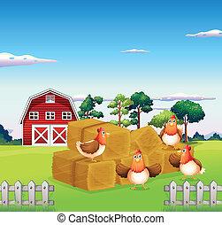 cuatro, pollos, en, el, heno, con, un, granero, en, el,...