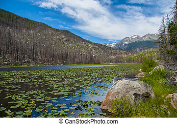 Cub lake - Gorgeous summer day at Cub Lake in Rocky Mountain...