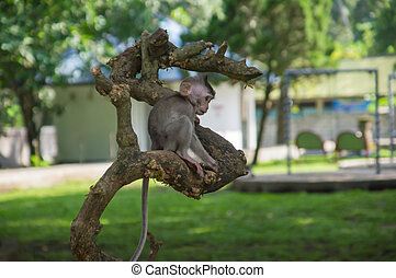 Cub of a monkey sitting on a tree branch