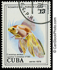 CUBA-CIRCA 1978: A stamp printed in Cuba shows fish ...