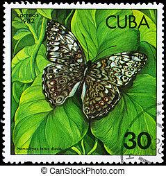CUBA - CIRCA 1982 Hamadryas - CUBA - CIRCA 1982: A Stamp ...