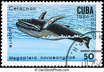 CUBA - CIRCA 1984 Humpback Whale - CUBA - CIRCA 1984: A...