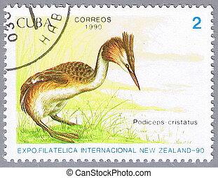 CUBA - CIRCA 1990: A stamp printed in Cuba shows Podiceps cristatus, series devoted to the birds, circa 1990