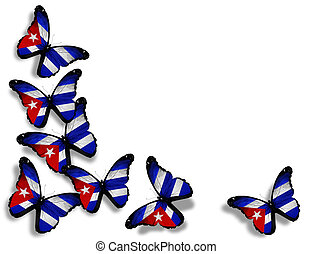 Cuban flag butterflies, isolated on white background