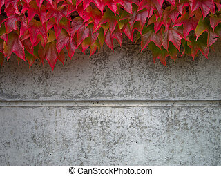 cubierta, pared, otoño, Concreto, salvaje, vino