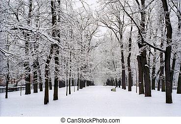 cubierto, avenida, nieve, árboles