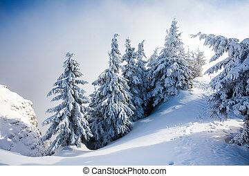 cubierto, nieve, árboles, pino