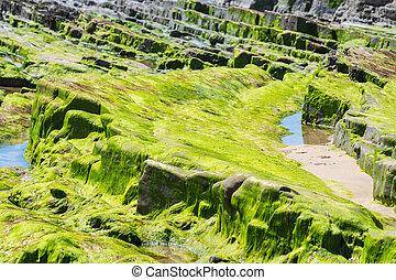 cubierto, piedras, después, rocas, marea, algas, fondo del mar, verde